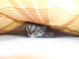 Kitty under the blankets by Faymara