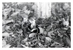 Squirrel in the Leaves by FaithlessIlladoreYou