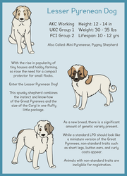 Lesser Pyrenean Dog Page 1: Overview by WolfHavenWoods