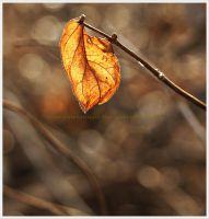 Golden Amber in December by GrotesqueDarling13