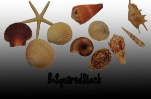 Sea Shell Brushes by B-SquaredStock