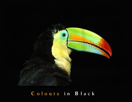 Colours in Black by pinkland
