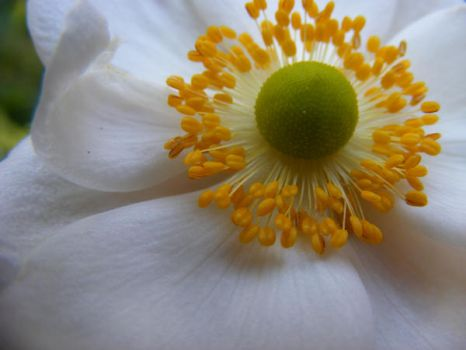 Bouton floral.... by Redcorp