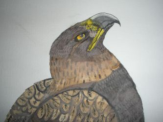 Golden Eagle Watercolour Upper Detail by NIGHTFURY18