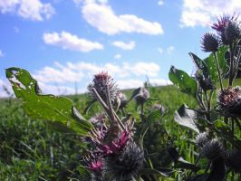 Journey of Five Little Thistles by Jemany