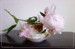 Teacup with delicate Peonies 6 by AnnaZLove