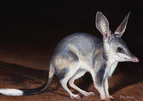 Bilby by Arrowfire