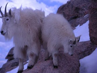 Mountain Goats .02 by homicidal-syn