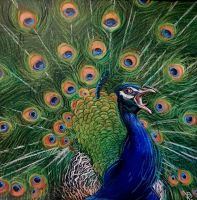 Peacock by Rpriet1