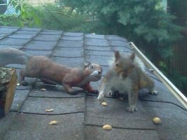 oh nuts by today-morning