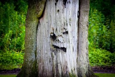 Funny Tree Face by BusterBrownBB