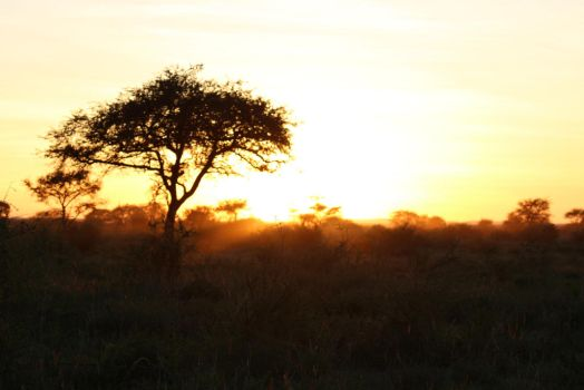 African mornings by DoWnHIller