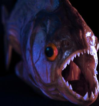 piranha by bobeck
