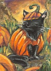 Pumpkin Black Cat. Not Amused. by sobeyondthis