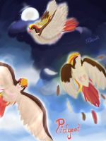 Pidgeot by xKDawnx