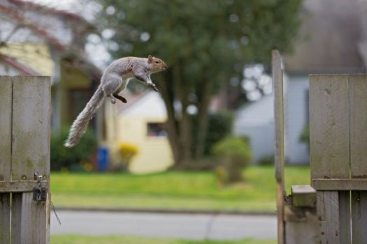 Eastern gray squirrel 87: To Infinity! by EasternGraySquirrel