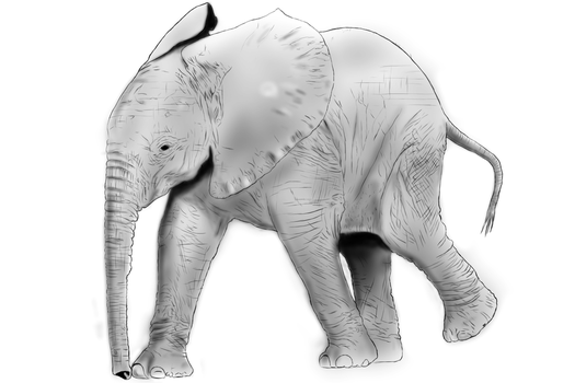elephant by Taluch