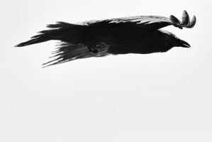 As the Crow Flies by clippercarrillo