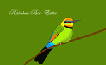 Rainbow bee-eater by bryce-lover