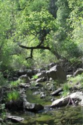 Stebbins Cold Canyon Reserve by Ciameth