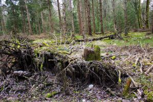 Forest V - Stock Photo by KarvinenStock