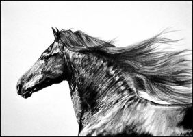 Drawing- Portrait of a Friesian horse by Ennete