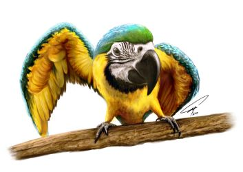 Blue and Gold Macaw by serksart