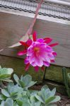 Pink Flower 2 by MLeighS
