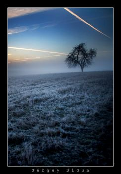 Frost filled morning... by sergey1984