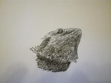 Inktober 2017, Day 18: Bearded dragon by GLangGould