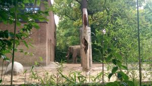 Elephant - Berlin Zoo by casper033