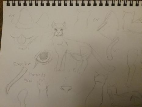 Practicing cat anatomy by creepergirl890