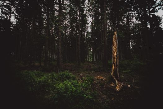 Brander Wald - 4 by chickow