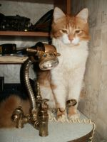 Steam-punk table-lamp and a cat by mpv666