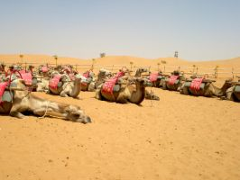 The Herd of Camels by Kitsumi-Hime