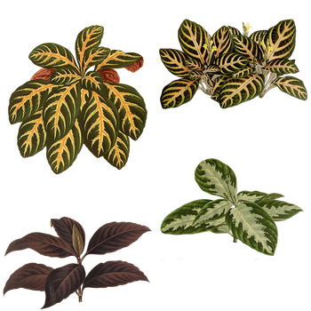 Variety of Plants 2 PNG by chaseandlinda