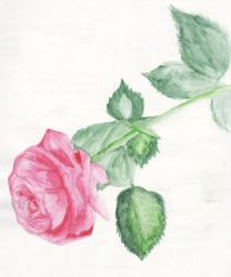 Pink Rose on Your Coffin Door by KJVonBlood