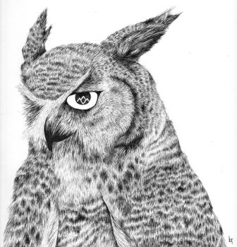 the owls are not what they seem by LindseyTebaldi