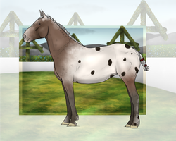 Chamier-Warmblood Import #038 *custom* by McClouding