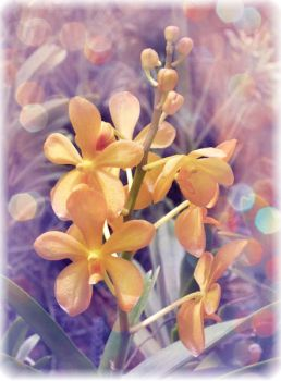 Yellow Orchids in the Light by x-kattywatty