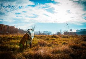A Horse, on a field, in the city, with a cape. by CybertronicStudios