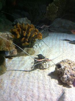Small fish with big antennas by tursiops33