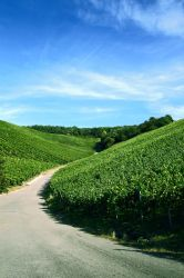 vineyards by hannses