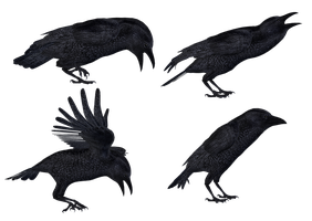 Crows 2 PNG Stock by Roy3D
