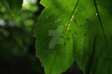 Leaves Close Up Shot by grumble-bum