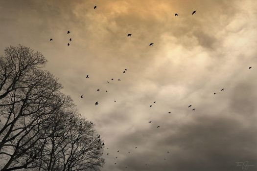 The Birds by Pajunen