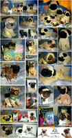 My PUG Collection by Spirit-Of-Alaska