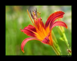 The Beauty of Nature by David-A-Wagner