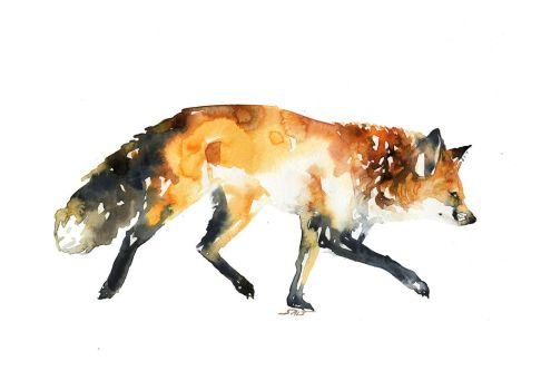 Vulpes by SALTWatercolors