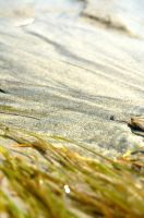 Gillies Bay Crab View 2 by lunatis